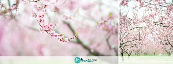 liz czinege photography spring