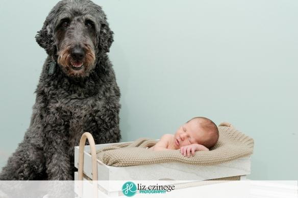 liz_czinege_niagara_hamilton_newborn_photographer08