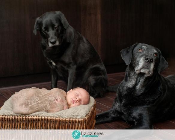 liz_czinege_niagara_grimsby_newborn_photographer10